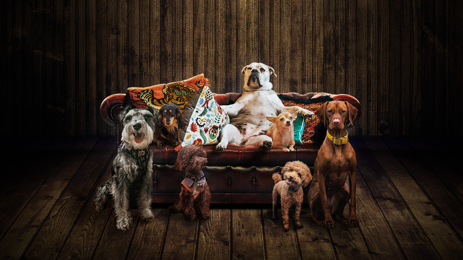 els gossos al teatre la villarroel de barcelona